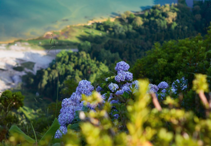 Biodiversity. Photo: Rui Silvestre via Unsplash.