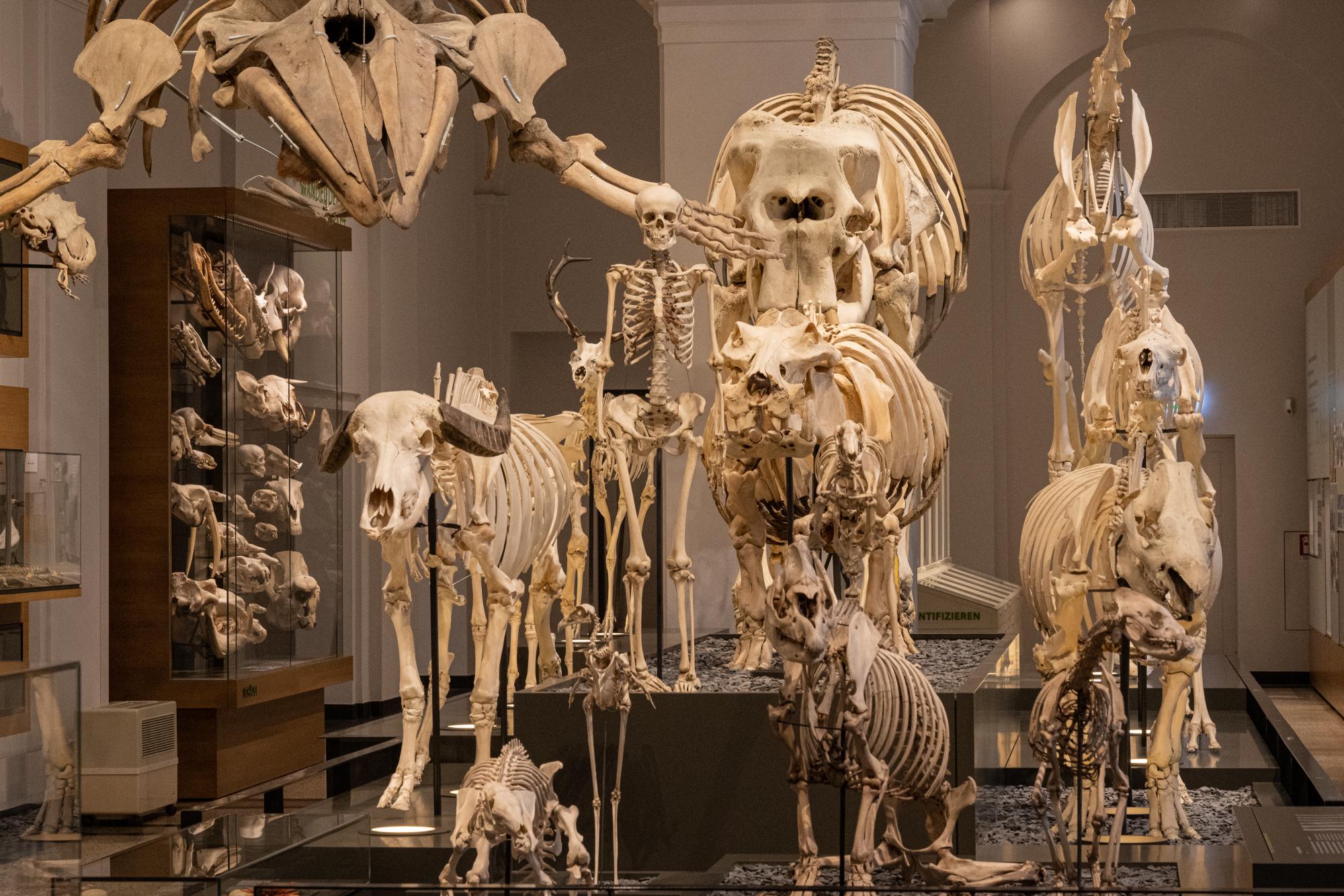 """Zoologie """"Wandel des Bauplans"""": Skelettparade"""